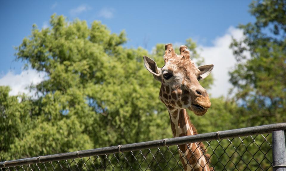 naar-de-dierentuin-met-digitaal-lesmateriaal-voor-biologie